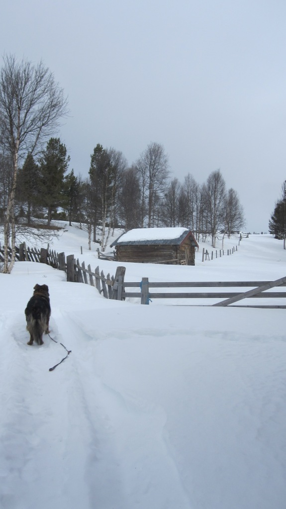 winter Norway2