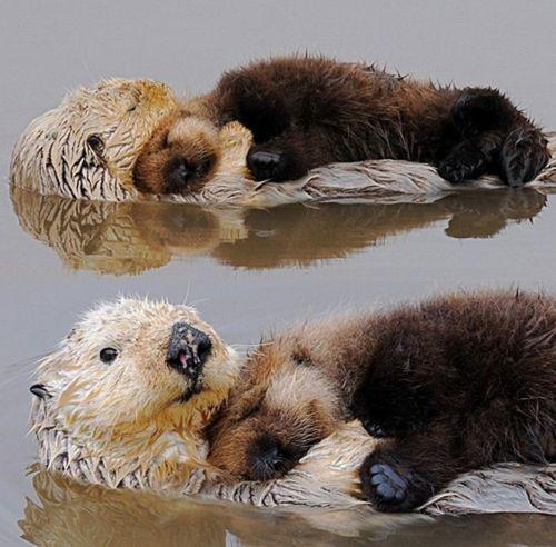 ottershugging
