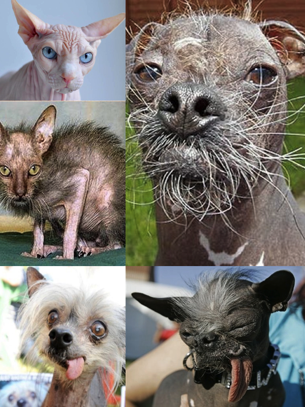 I'm sorry, I couldn't help myself. These guys don't stand a chance to the beauty pressure in the pet world these days..