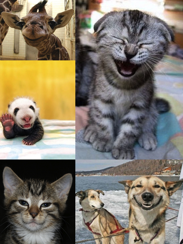 Smiling Animals